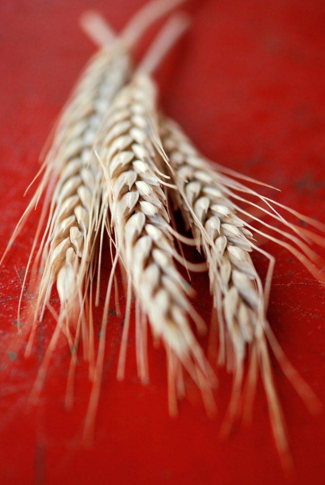 Wheat on Red FIX.jpg