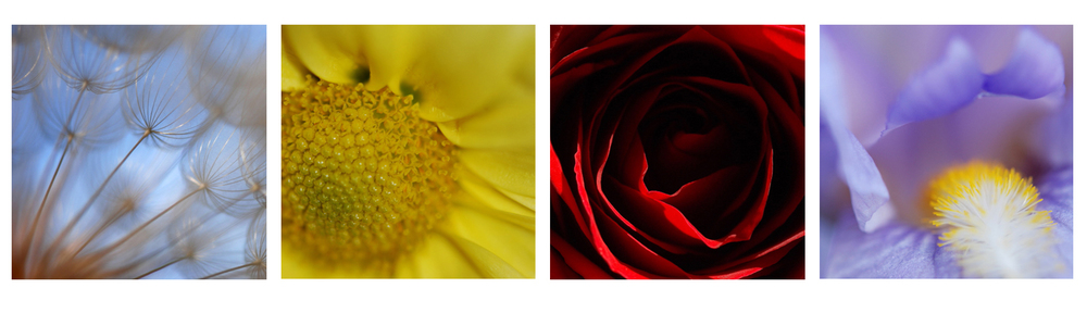Leaf and Bloom is my shop of botanical photography.