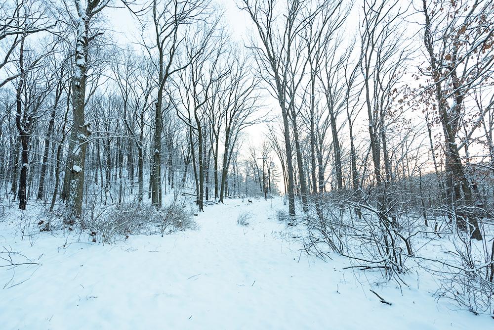 2019-03 Hartwood  Acres Snow (115) FIX.jpg