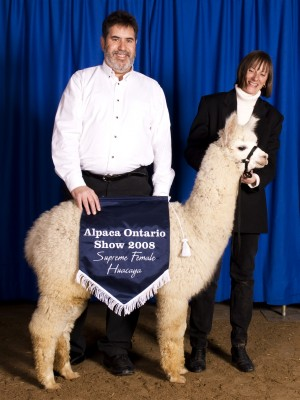 Stephen and Marj Brady rear prize winning alpaca.