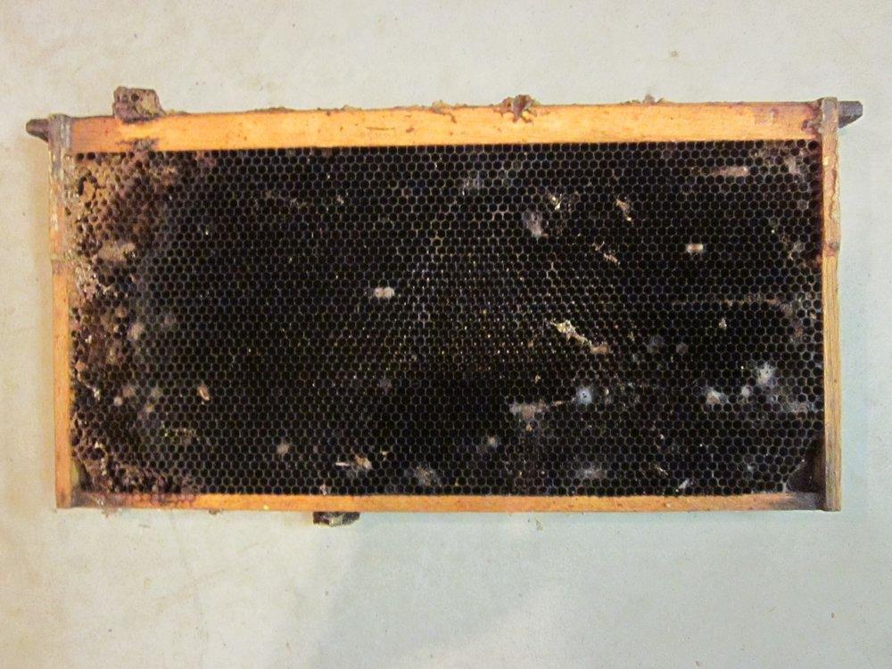 Hive frame