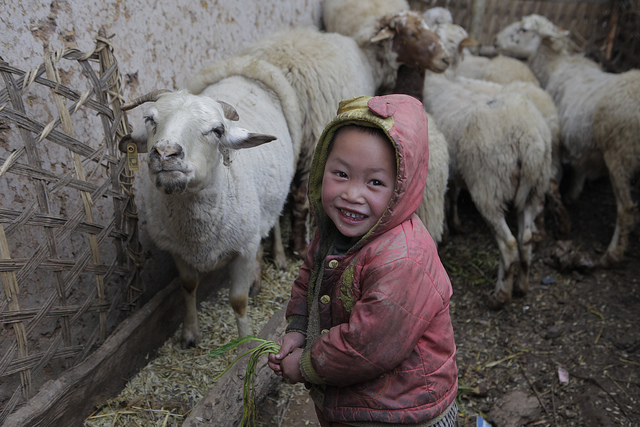 Sheep $120