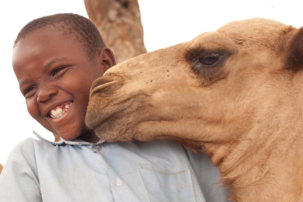 Camel $850