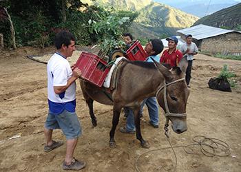Donkey $120