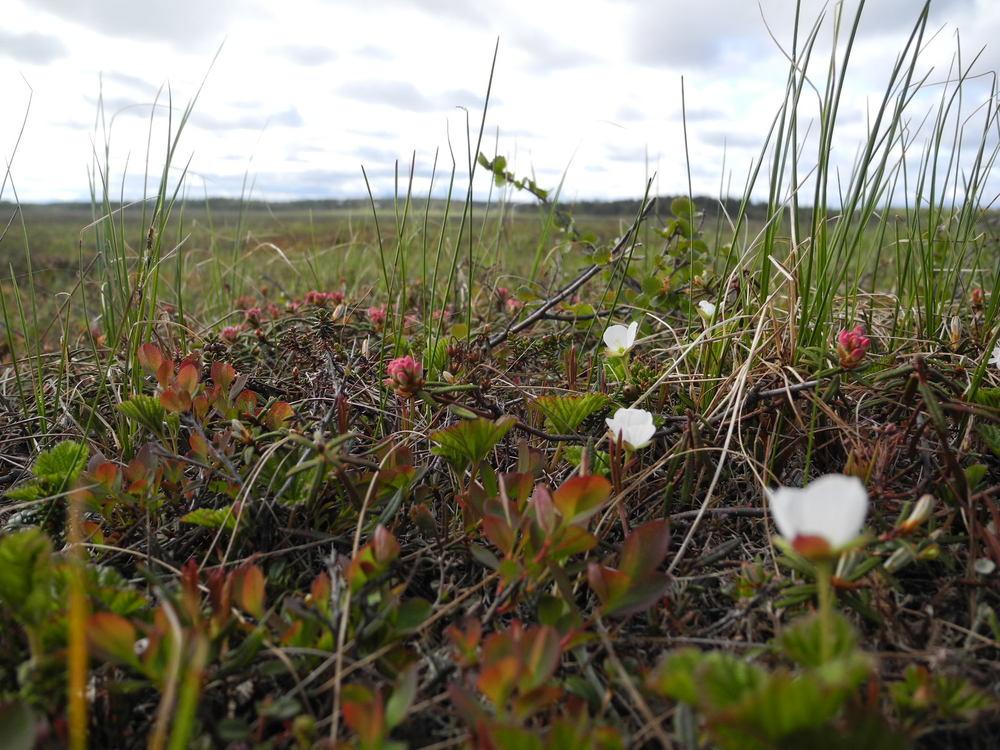Tundra near Dillingham, Alaska