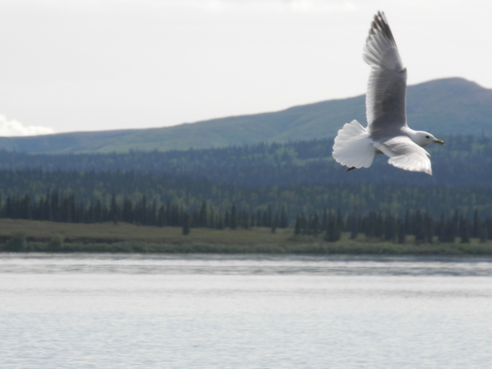 Bird flying over Lake