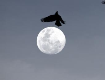 BIRDS IN THE SKY BY GOWEII.jpg