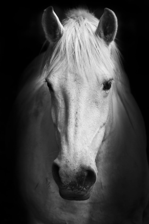PHOTO BY MATEJ KASTELIC