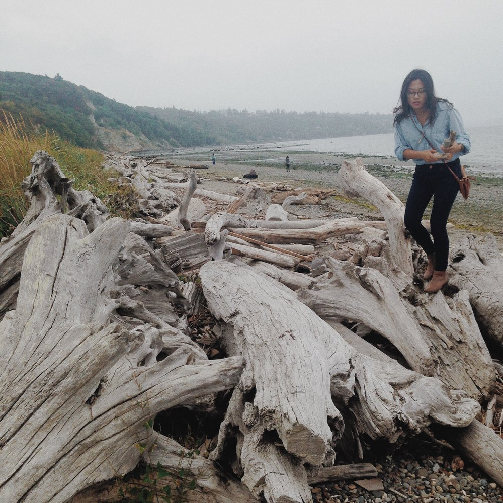 Collecting driftwood from Discovery Park