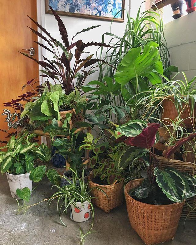 It's watering day! #indoorplantsquad 🤓