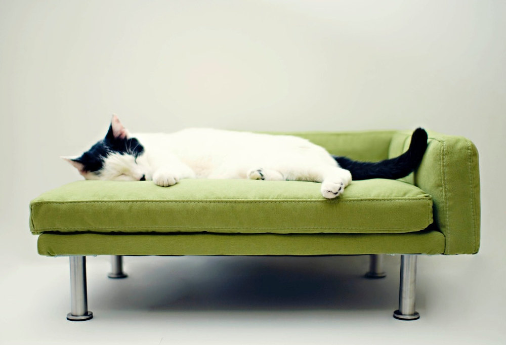 Cat Chaise Lounger Via ModPet