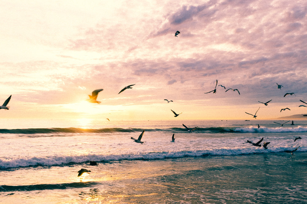 Sunset in SM Seagulls.jpg