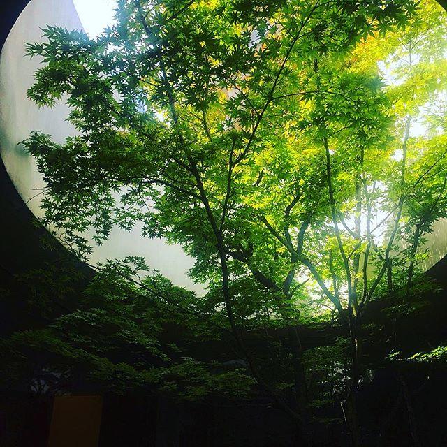 Skylight #Tokyo