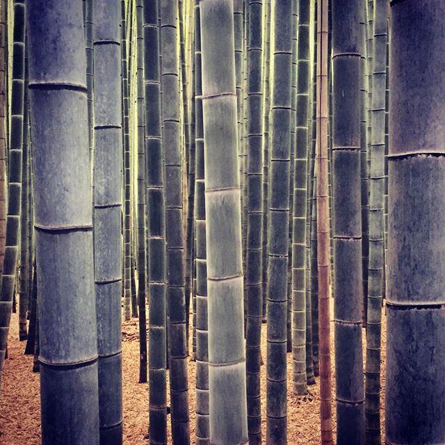 Bamboo #kyoto