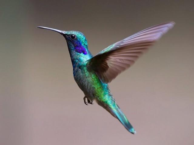 hummingbirdpoem.jpg