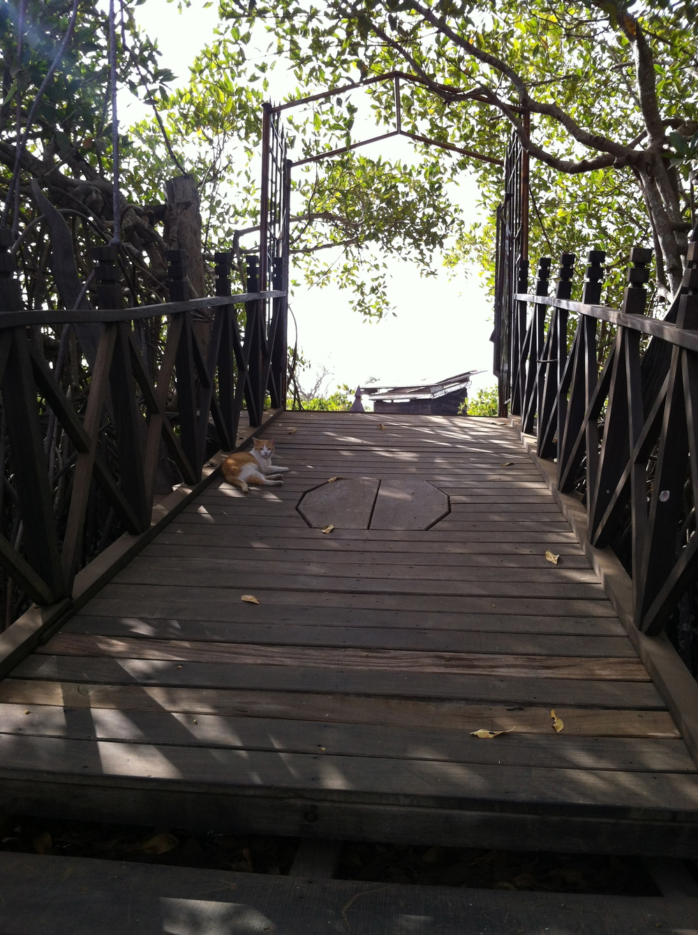 The jetty leading to land from our floating lodge, complete with adopted cat