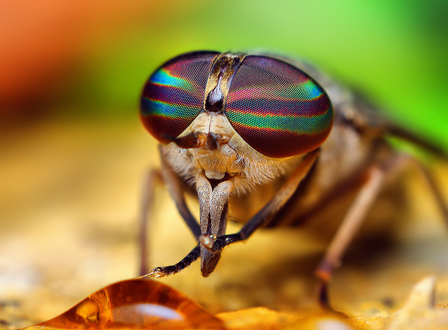 Nice shades, Mr Fly! Image by Thomas Shahan