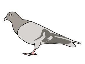 pigeon_clipart.jpg