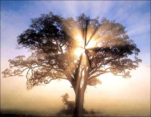 tree-light.jpg