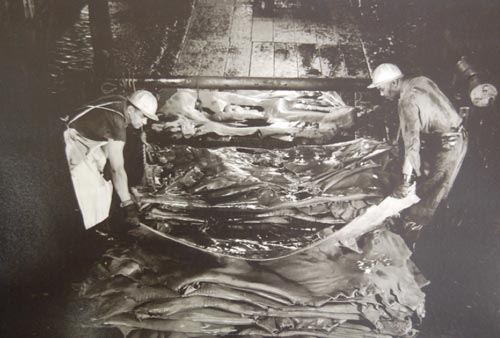 Workers remove hides from pits in the Beam House.  Source Tannery Arts History
