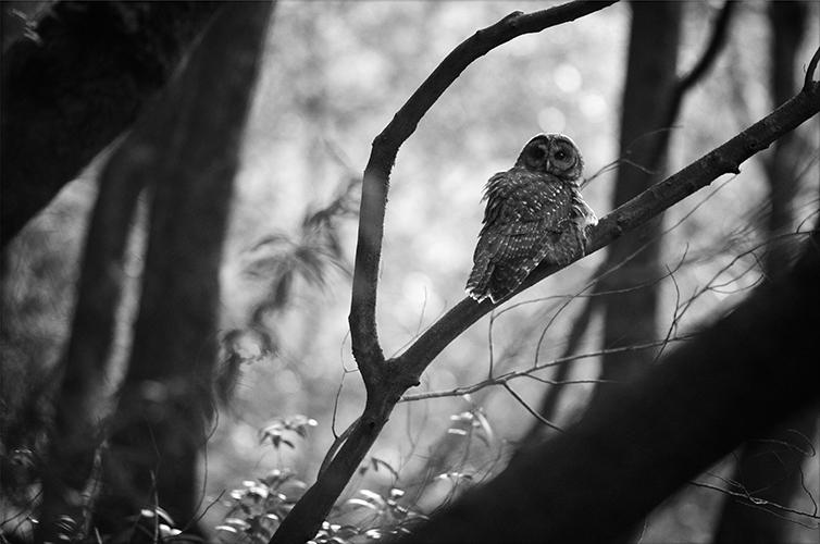 trish-carney-owls.jpg