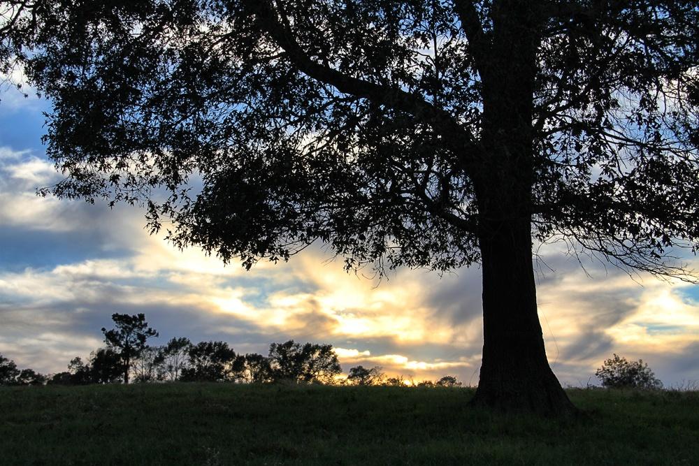 East Texas sky