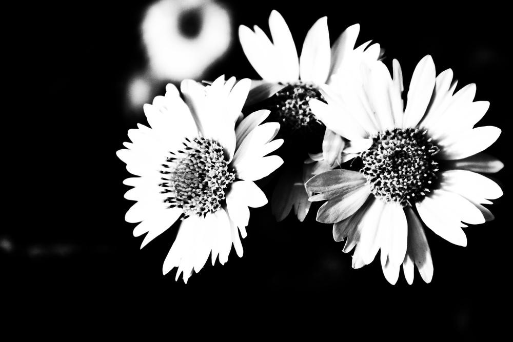 BW Flowers - whitneybwheeler.com