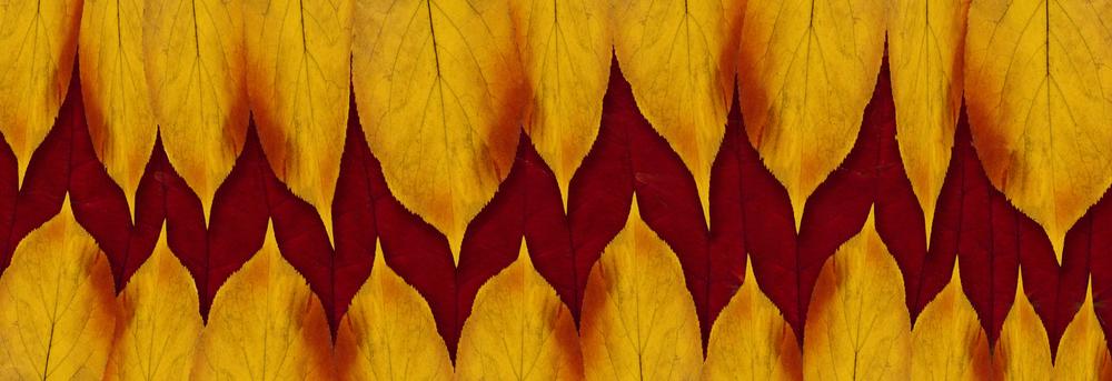 Autumn EKG Line