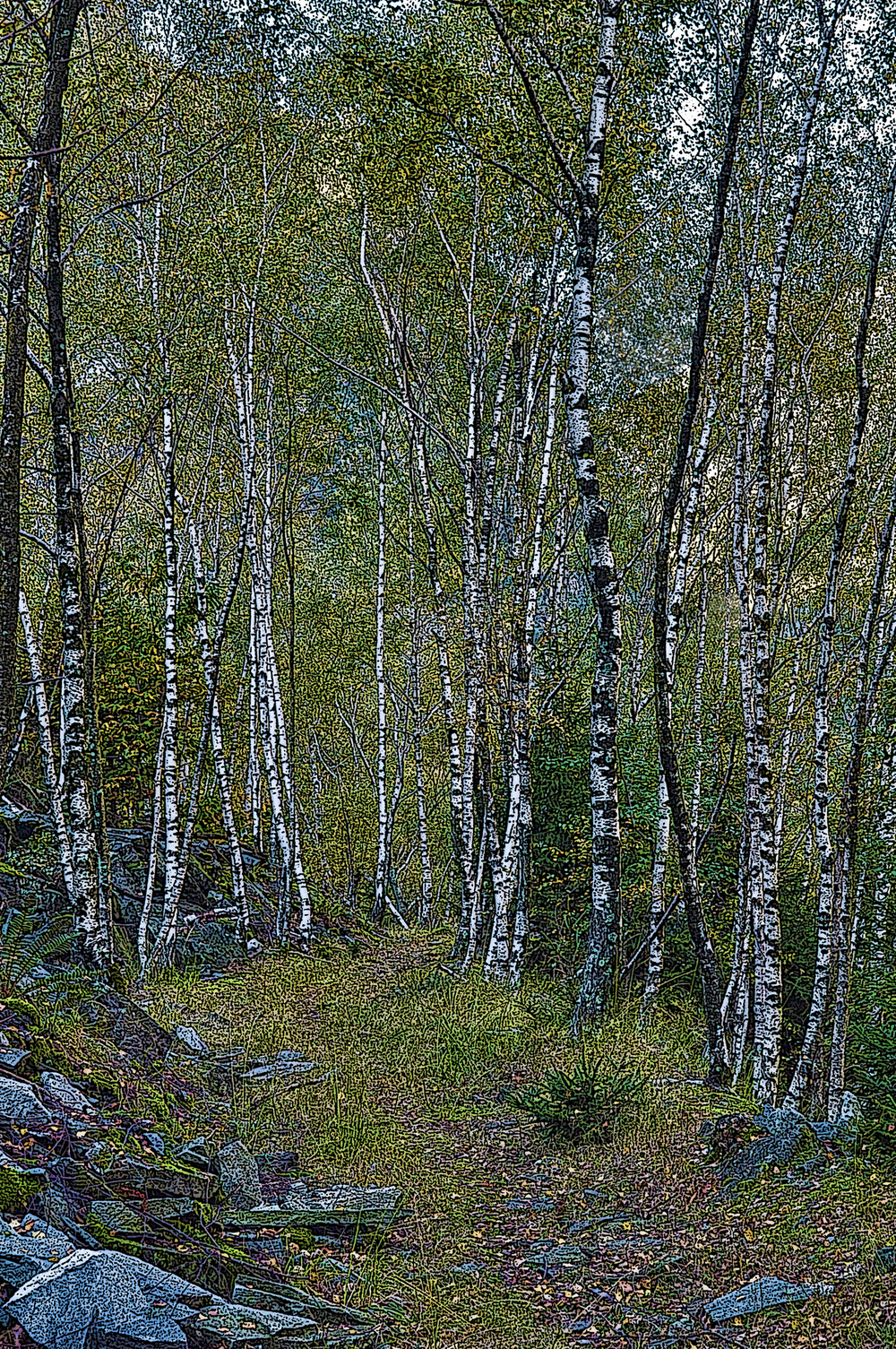 Birch Forest, Switzerland