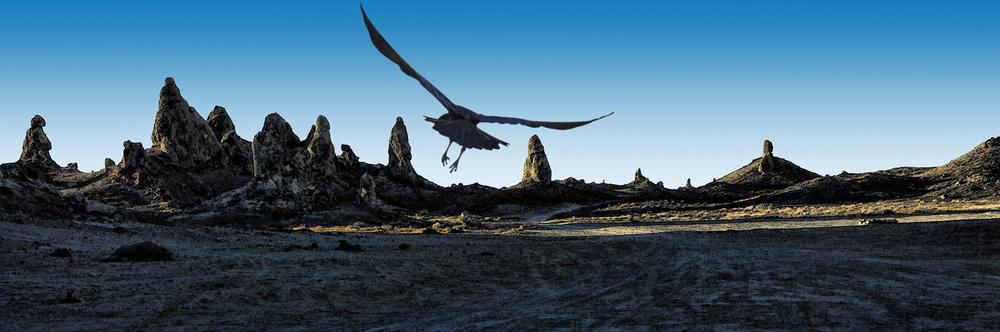 Trona Raven Sunrise • Trona Pinnacles, CA