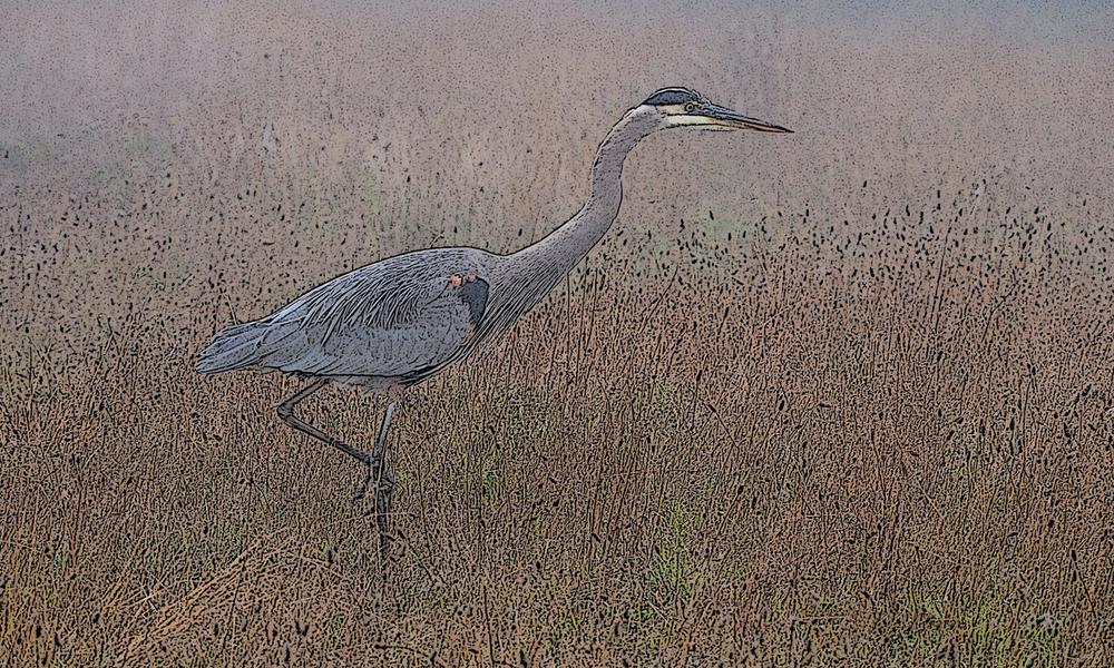 Heron in Fog