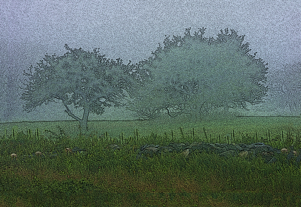 Orchard in Fog 1