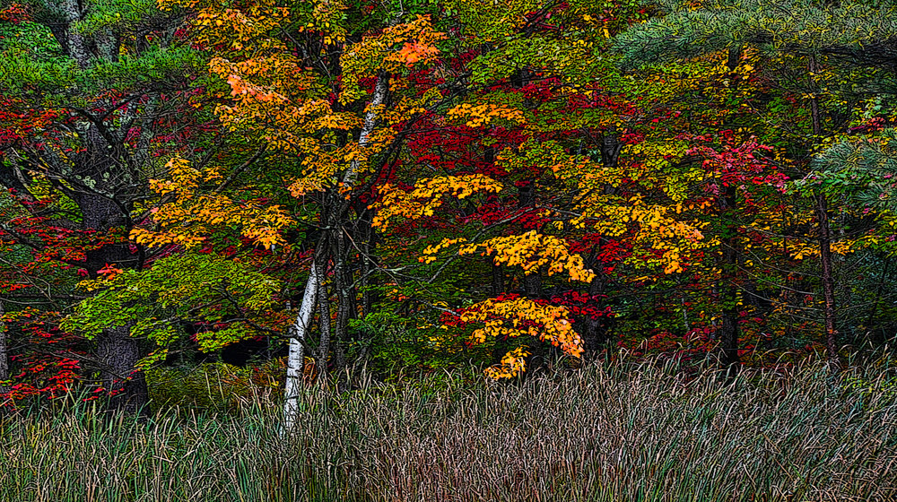 Fall Colors - Heath Massachusetts
