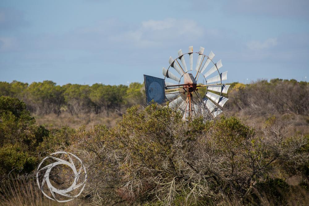 20130615_buffalofontein-26.jpg