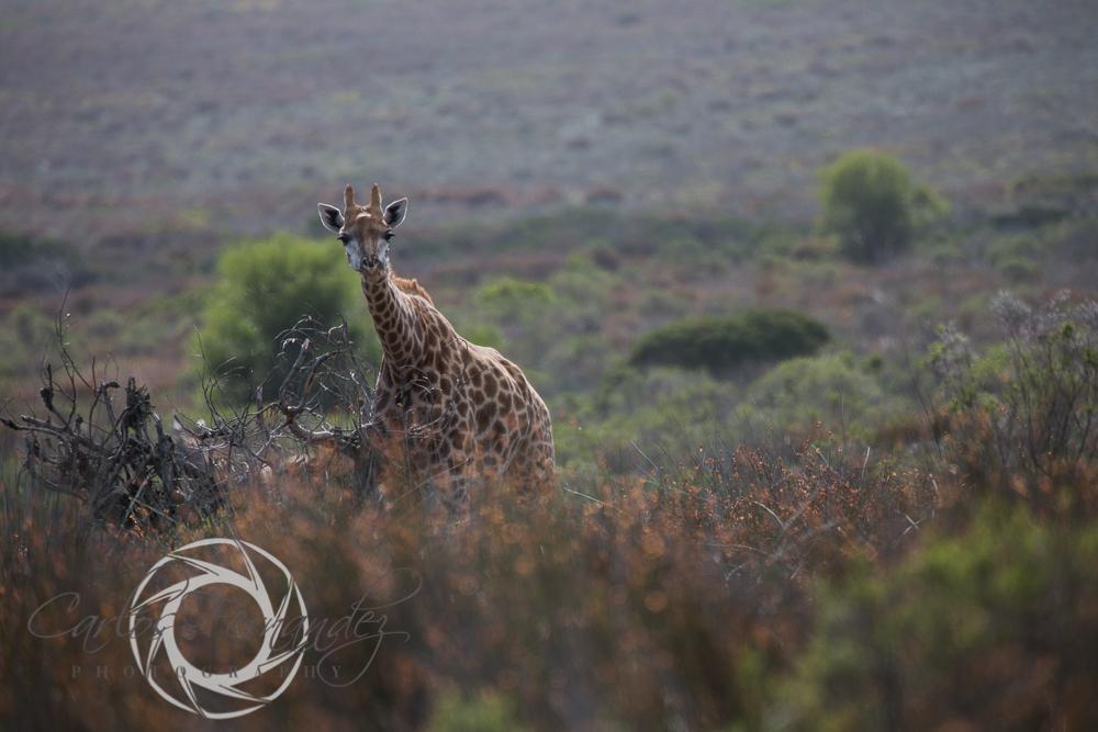 20130615_buffalofontein-15.jpg