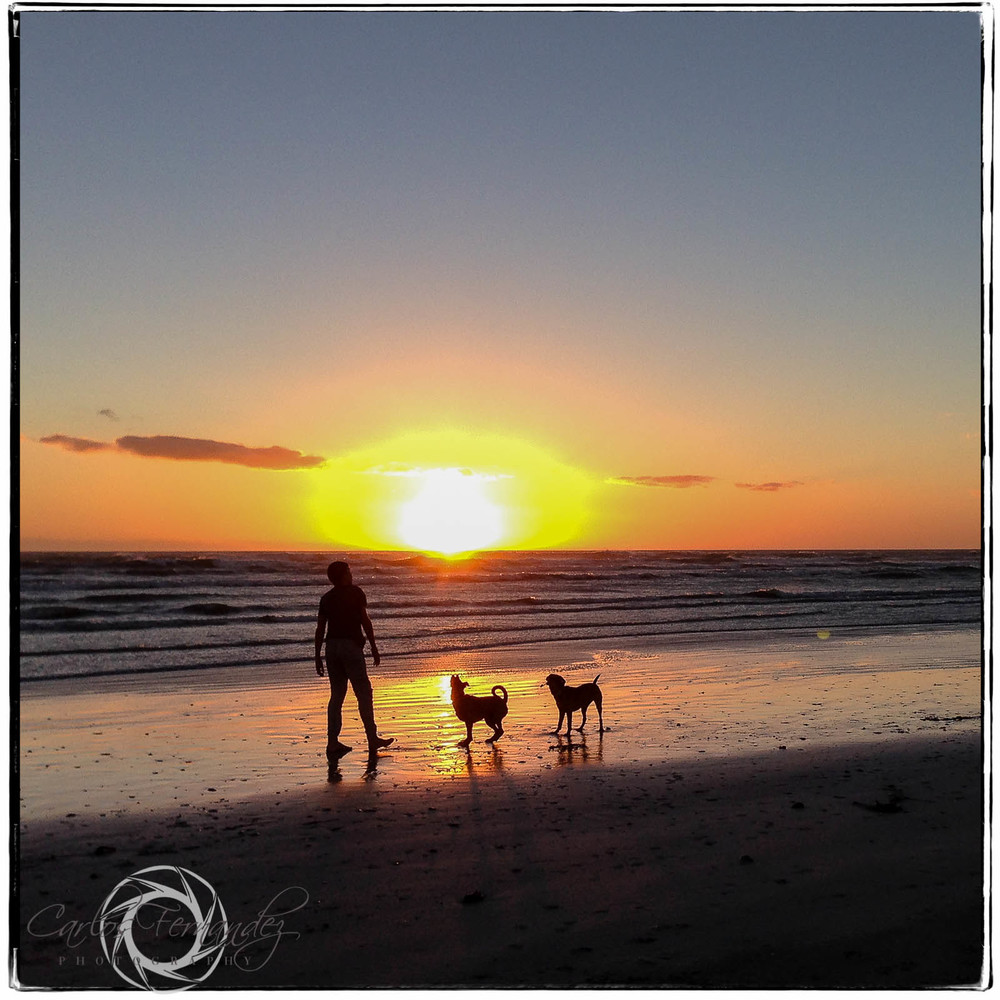 """Dogs at Sunset-Cape Town""-My 365 Project 112/365"