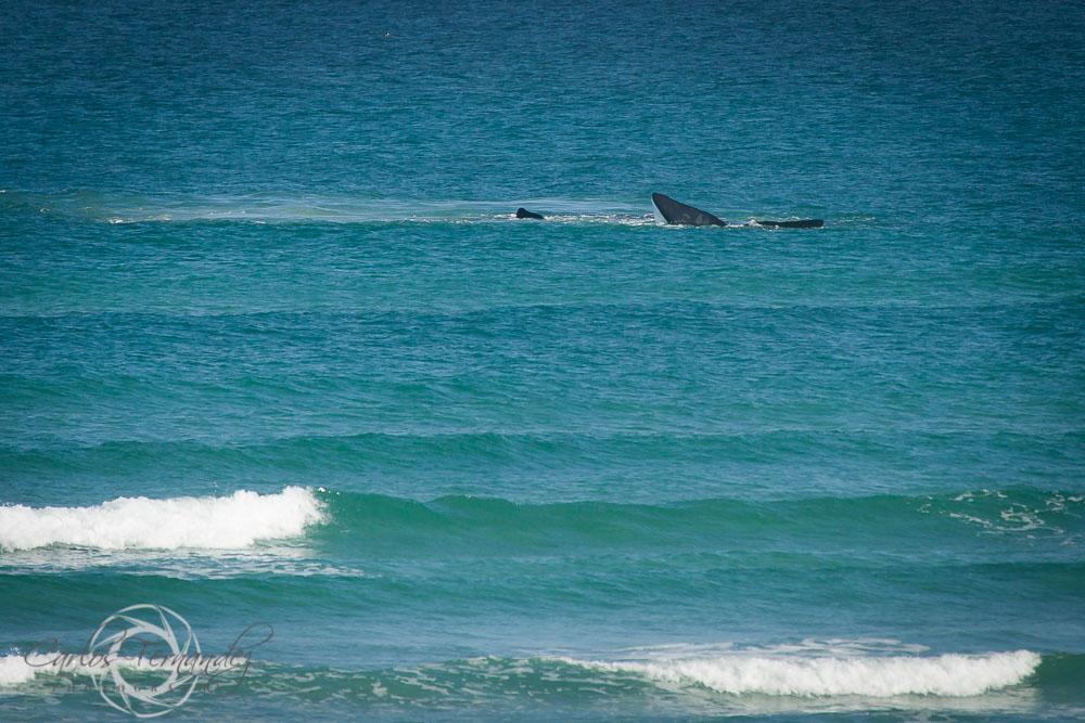 20140808_whales_10.jpg