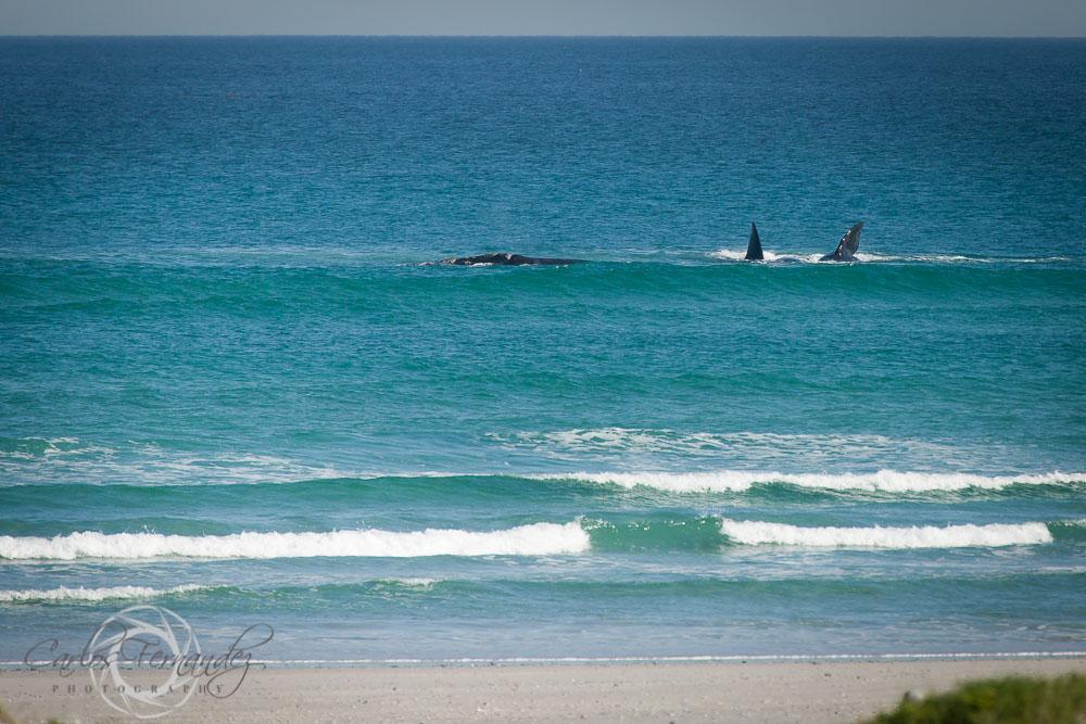 20140808_whales_11.jpg