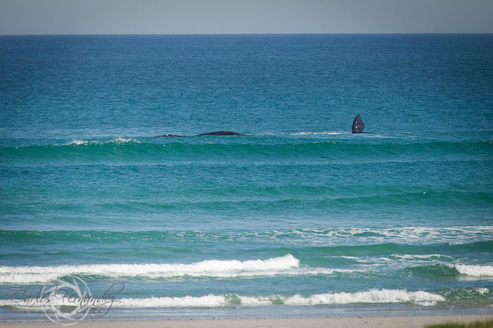 20140808_whales_14.jpg