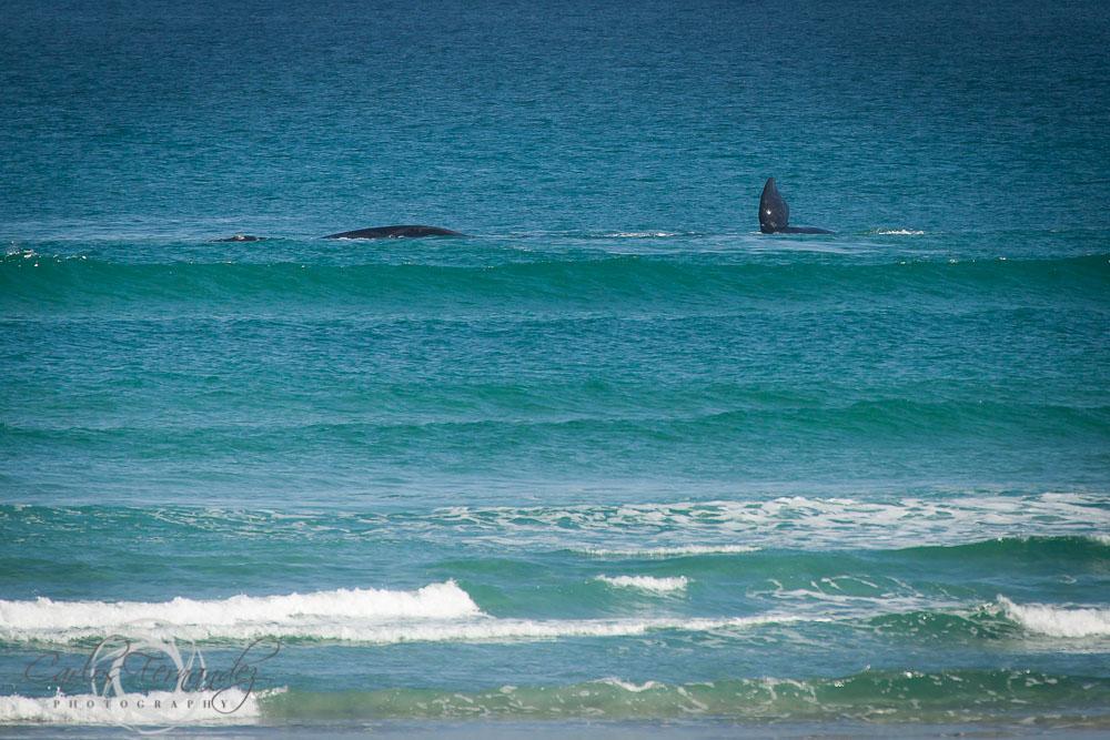 20140808_whales_13.jpg