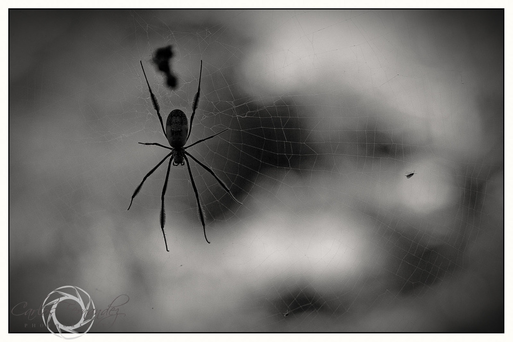 Along Came a Spider... - 179/365