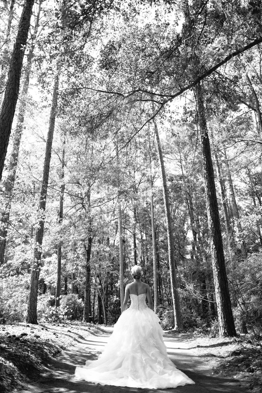 bride in trees.jpg