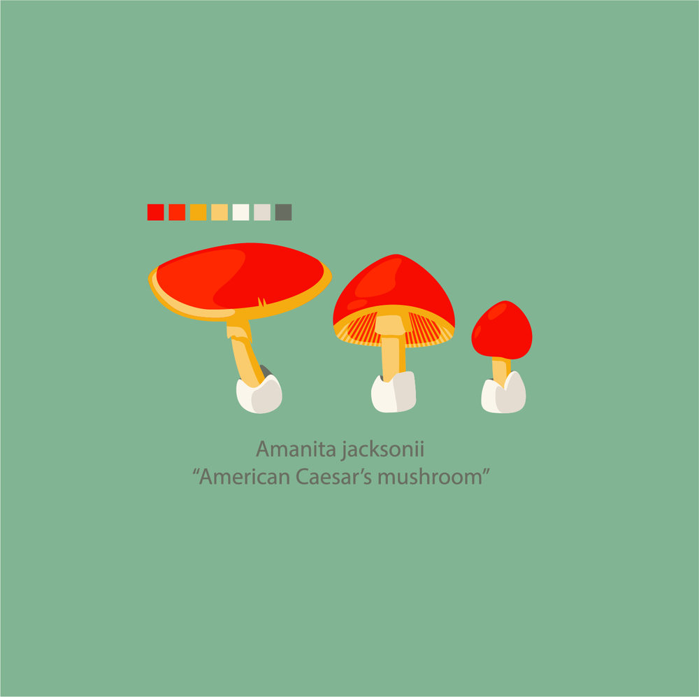 Mushroom_Amanita jacksonii.jpg