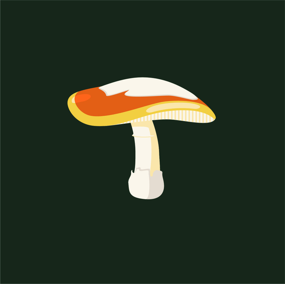 Mushroom_Amanita calyptroderma.jpg