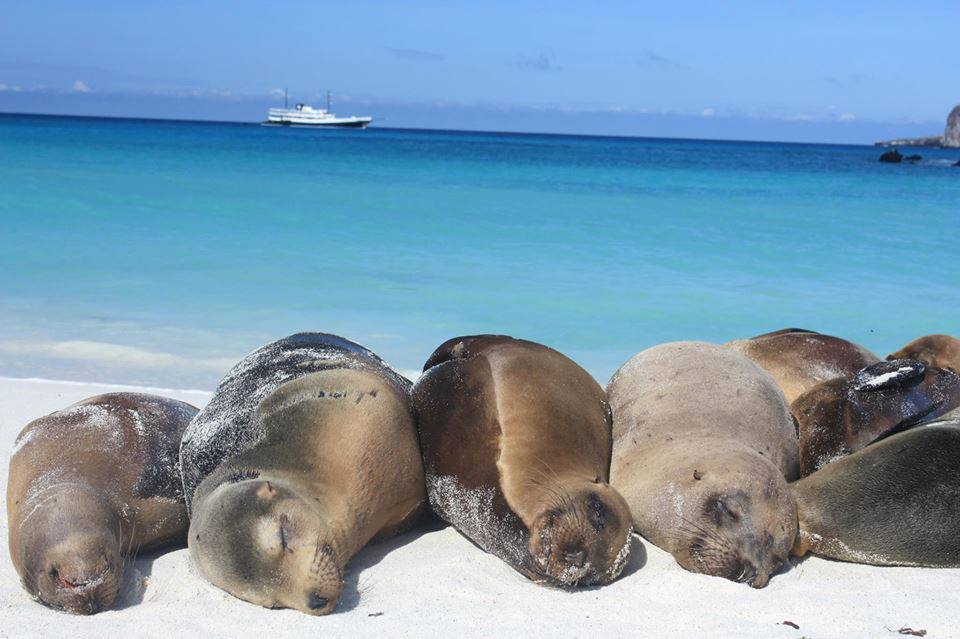 Unfortunately, this is what I'd look like on a beach on the Galapagos Islands. Image:  Pinterest