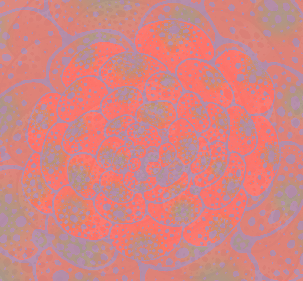 succulentplant2rep.jpg
