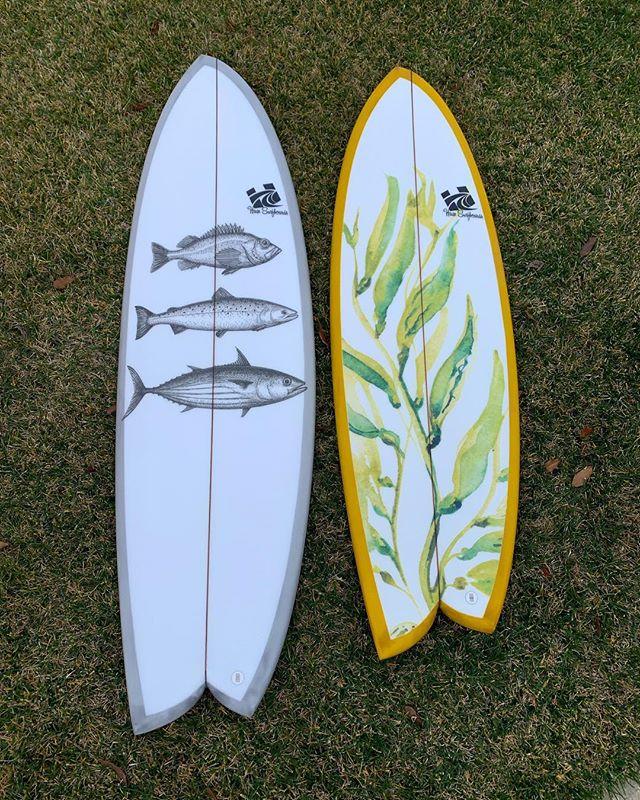 Important ecosystem dynamics right here! #asymlove . . #haze #hazesurf #hazesurfboards #surf #customsurfboards #designsbyhaze #surfdesign #surfboard #asymmetricalsurfboards