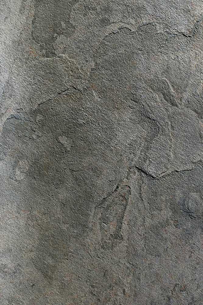 AxolotlStone_Petra5.jpg