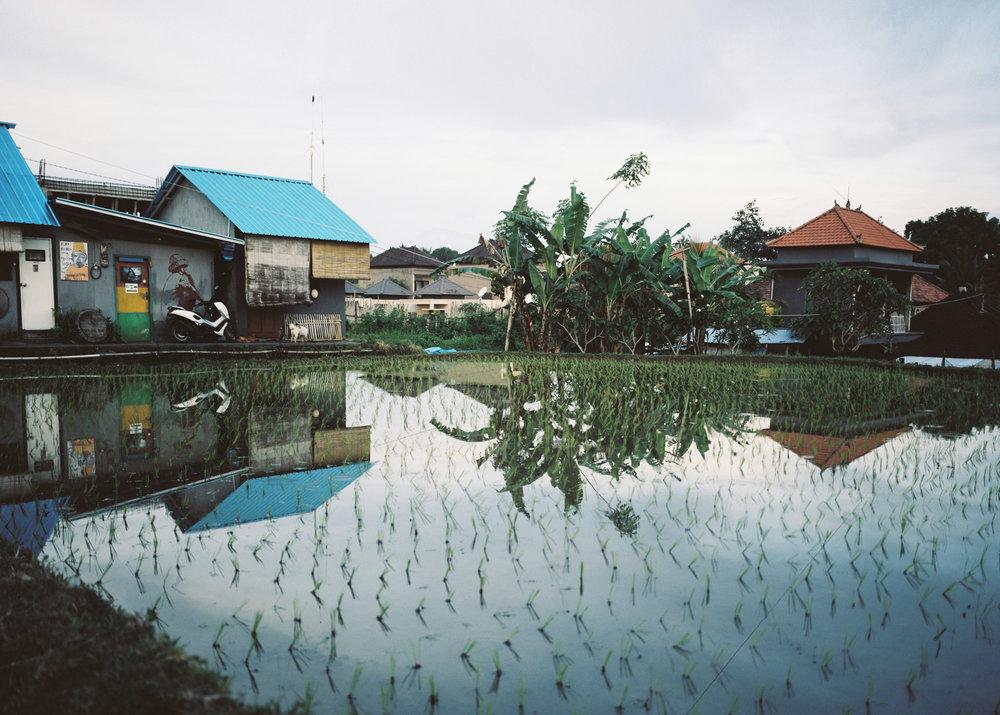 Bali (6 of 1).jpg
