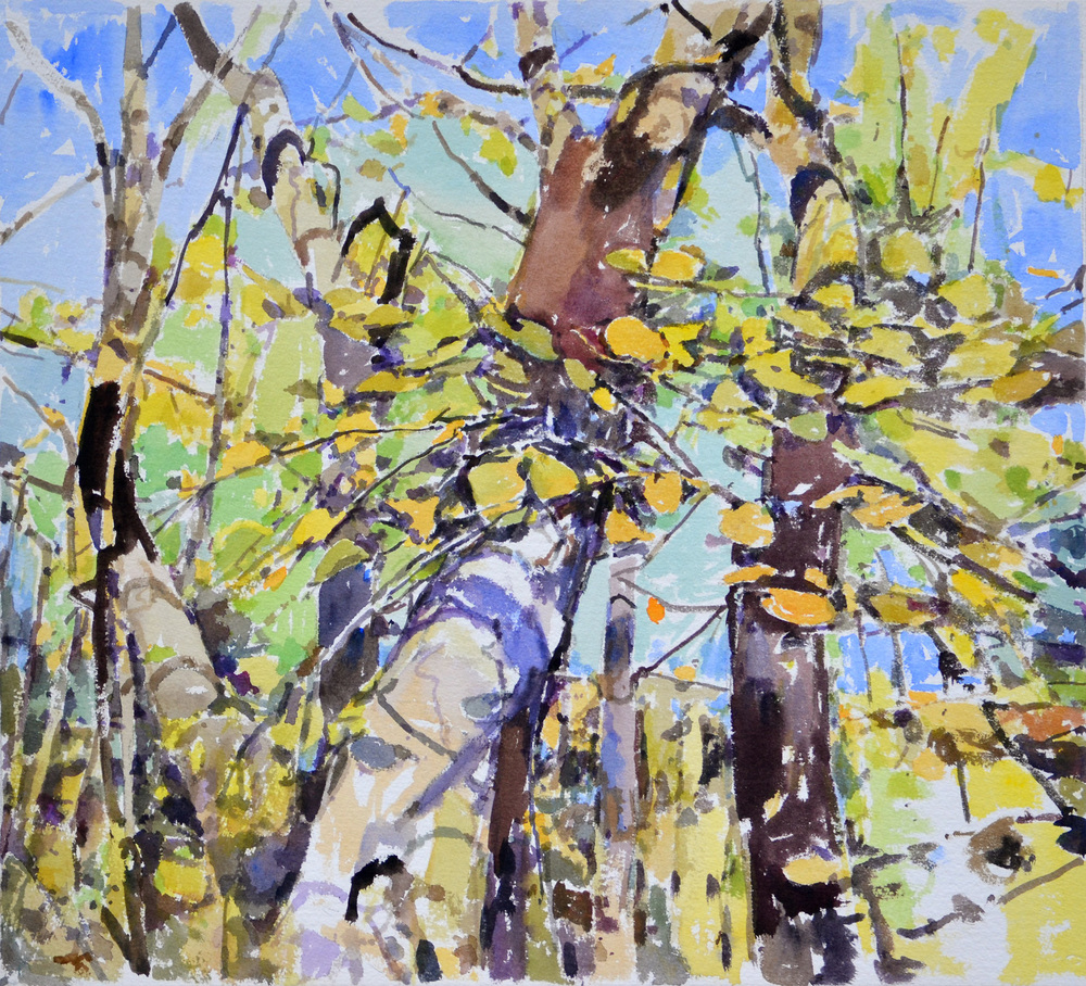 "Turning Birches,  William Chickillo, 22"" x 24 1/2"" watercolor"